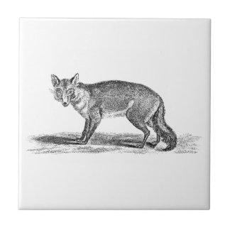 Ejemplo astuto del Fox del vintage - zorros 1800's Azulejo Cuadrado Pequeño
