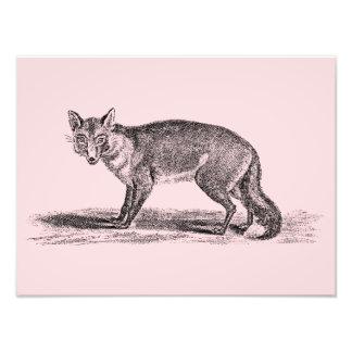 Ejemplo astuto del Fox del vintage - zorros 1800's Cojinete