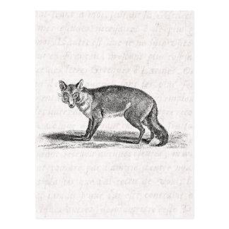 Ejemplo astuto del Fox del vintage - zorros 1800's Postales
