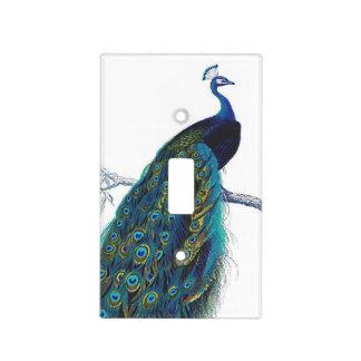 Ejemplo azul del pavo real tapas para interruptores