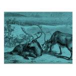 Ejemplo azul del reno del vintage tarjetas postales