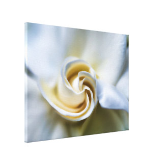Ejemplo blanco del Gardenia Impresión En Lienzo
