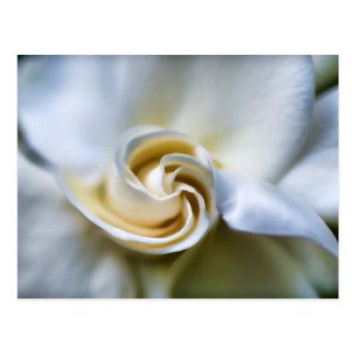 Ejemplo blanco del Gardenia Postales