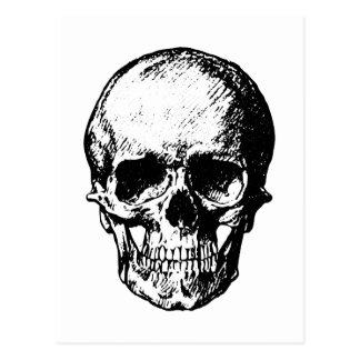Ejemplo blanco y negro del cráneo del vintage postales
