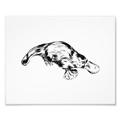 Ejemplo blanco y negro realista de Platypus Impresiones Fotograficas