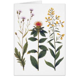 Ejemplo botánico antiguo Bertuch de los Wildflower Tarjetas