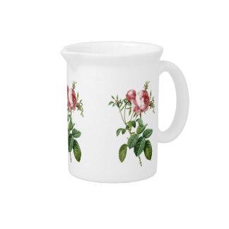 Ejemplo botánico color de rosa rosado del vintage jarron
