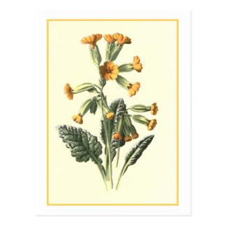 "Ejemplo botánico de ""Cowslip"" Tarjeta Postal"