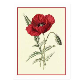 "Ejemplo botánico de la ""amapola común"" tarjetas postales"