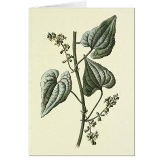 """Ejemplo botánico de la """"brionia negra"""" tarjeta de felicitación"""