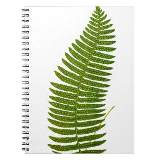Ejemplo botánico de la hoja verde y amarilla del h libro de apuntes