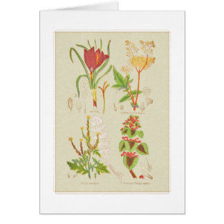Ejemplo botánico de la placa I Tarjeta De Felicitación