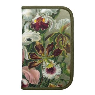 Ejemplo botánico de las orquídeas del vintage 1865 organizador