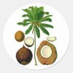 Ejemplo botánico del árbol de coco etiqueta redonda