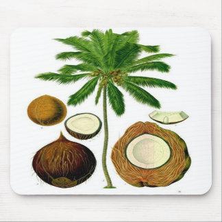 Ejemplo botánico del árbol de coco alfombrillas de ratones