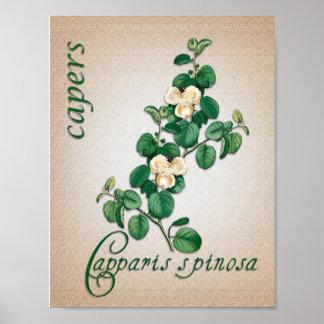 Ejemplo botánico del aromatherapy de alcaparras posters