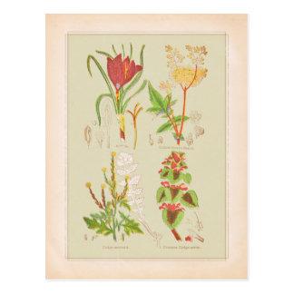 Ejemplo botánico del arte de la placa I Tarjeta Postal