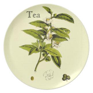 Ejemplo botánico del té del vintage plato de comida