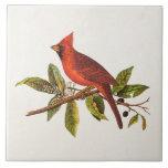 Ejemplo cardinal del pájaro de la canción del azulejo cuadrado grande