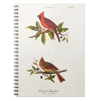 Ejemplo cardinal del pájaro de la canción del libretas espirales