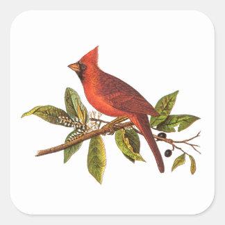 Ejemplo cardinal del pájaro de la canción del pegatina cuadrada