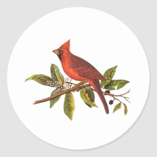 Ejemplo cardinal del pájaro de la canción del pegatina redonda
