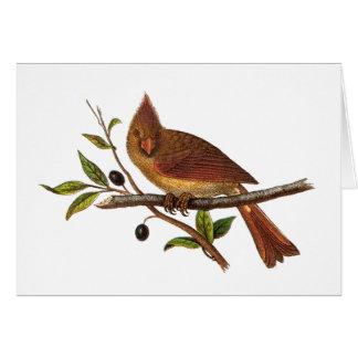 Ejemplo cardinal del pájaro de la canción del tarjeta de felicitación