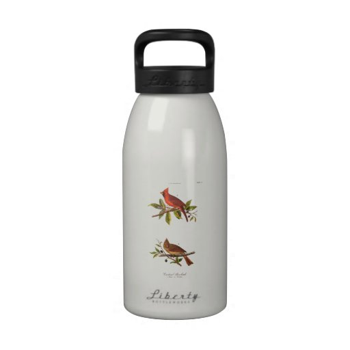 Ejemplo cardinal del pájaro de la canción del vint botella de beber