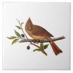 Ejemplo cardinal del pájaro de la canción del vint tejas  cerámicas