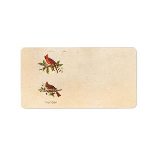 Ejemplo cardinal del pájaro de la canción del vint etiqueta de dirección