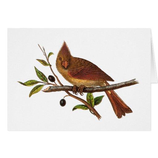 Ejemplo cardinal del pájaro de la canción del vint felicitaciones