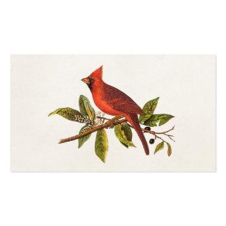 Ejemplo cardinal del pájaro de la canción del vint tarjetas de visita