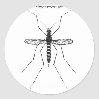 Ejemplo científico de la nomenclatura del mosquito etiqueta