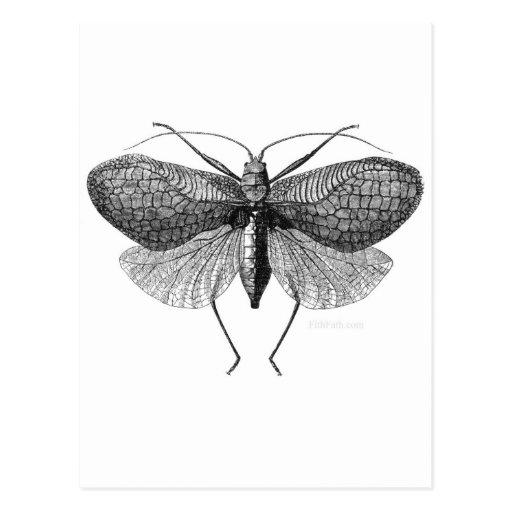 ejemplo científico de la polilla tarjeta postal