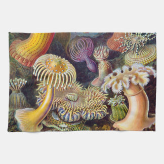 Ejemplo científico de las anémonas de mar del toalla de cocina