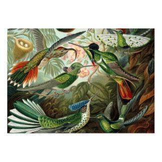 Ejemplo científico de los colibríes del vintage plantillas de tarjetas personales