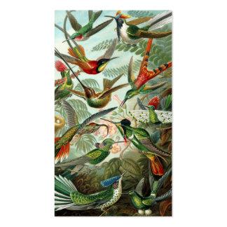 Ejemplo científico de los colibríes del vintage tarjetas de visita