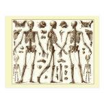 Ejemplo científico del esqueleto humano tarjeta postal