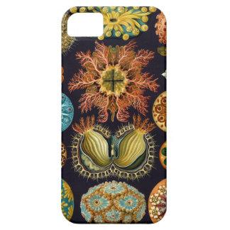 Ejemplo científico del vintage de Ernst Haeckel Funda Para iPhone 5 Barely There