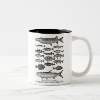 Ejemplo clásico de la pesca de los pescados del vi tazas de café