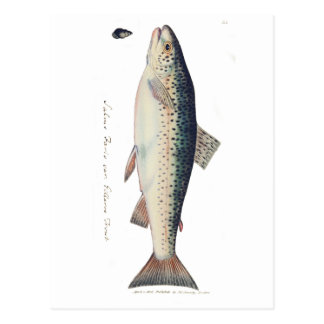 Ejemplo colorido de los salmones del vintage tarjeta postal