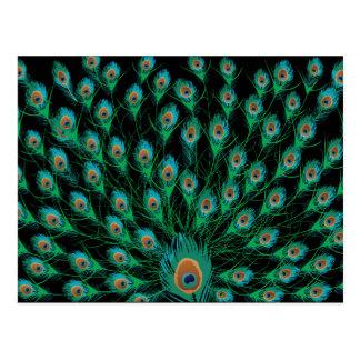 Ejemplo con las plumas del pavo real en negro postales
