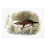Ejemplo de Bill Platypus del pato de los 1800s del Invitacion Personal