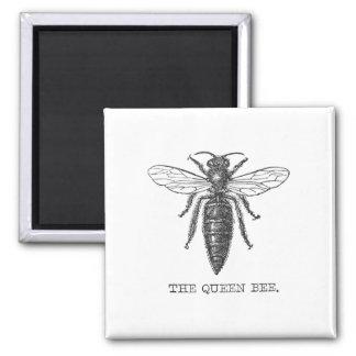 Ejemplo de la abeja reina del vintage imán cuadrado