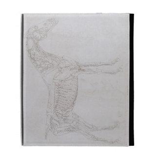 Ejemplo 'de la anatomía del caballo, inclu