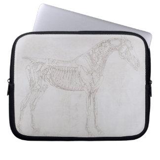 Ejemplo 'de la anatomía del caballo, inclu funda portátil