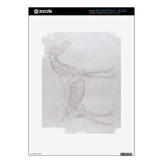 Ejemplo 'de la anatomía del caballo, inclu iPad 3 pegatina skin