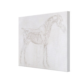 Ejemplo 'de la anatomía del caballo, inclu lona estirada galerías