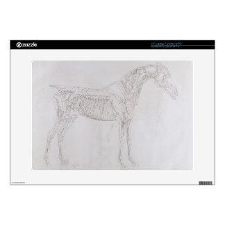 Ejemplo 'de la anatomía del caballo, inclu portátil 38,1cm skin