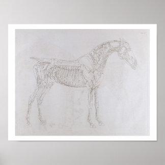 Ejemplo 'de la anatomía del caballo, inclu póster